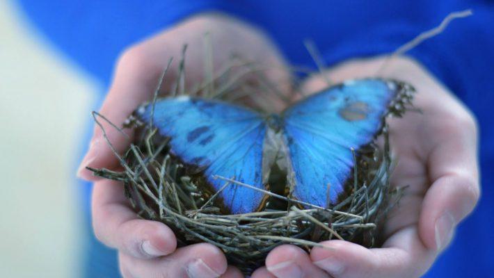 Wortels en vleugels