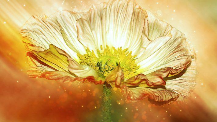 Opus Magnum ~ Het Grote Innerlijke Alchemie Werk Doen!